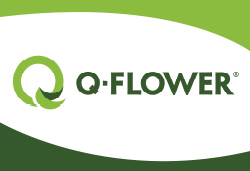 Q-Flower GmbH & Co. KG